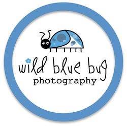 wild-blue-bug-logo-photogtaphy-branding