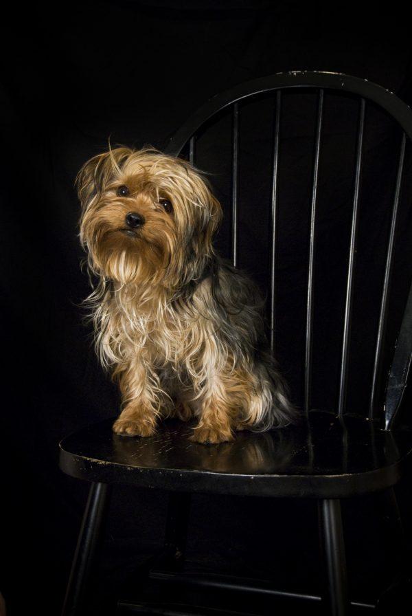 pet-photography-dog-cat-studio-wild-blue-bug-jodi-jahrling-cortez-dolores-durango-telluride-mancos-dolores-montezuma-laplata